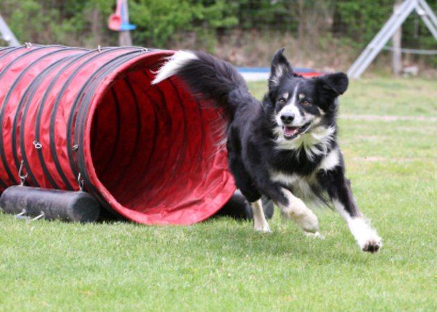 exposition canine bordeaux