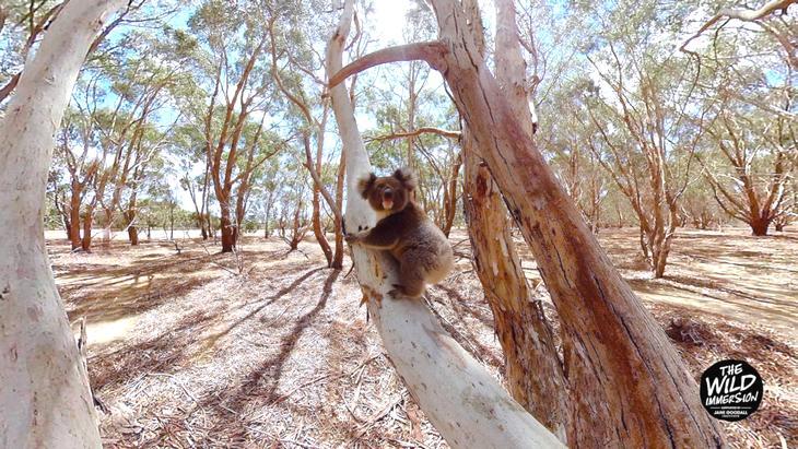 Photo of Visitez la plus grande réserve animale en réalité virtuelle !