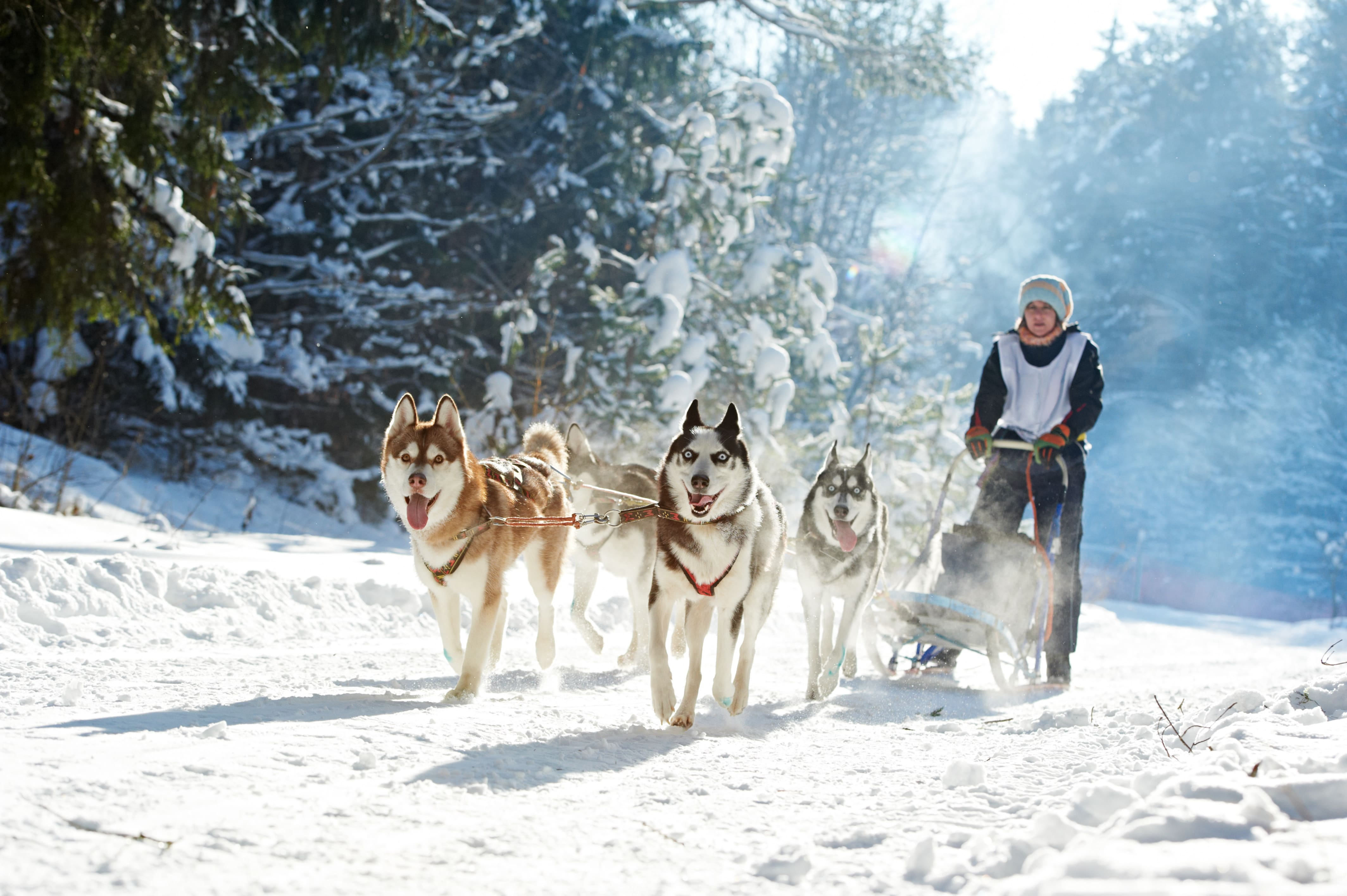 Photo of 5 activités insolites à faire dans les Pyrénées