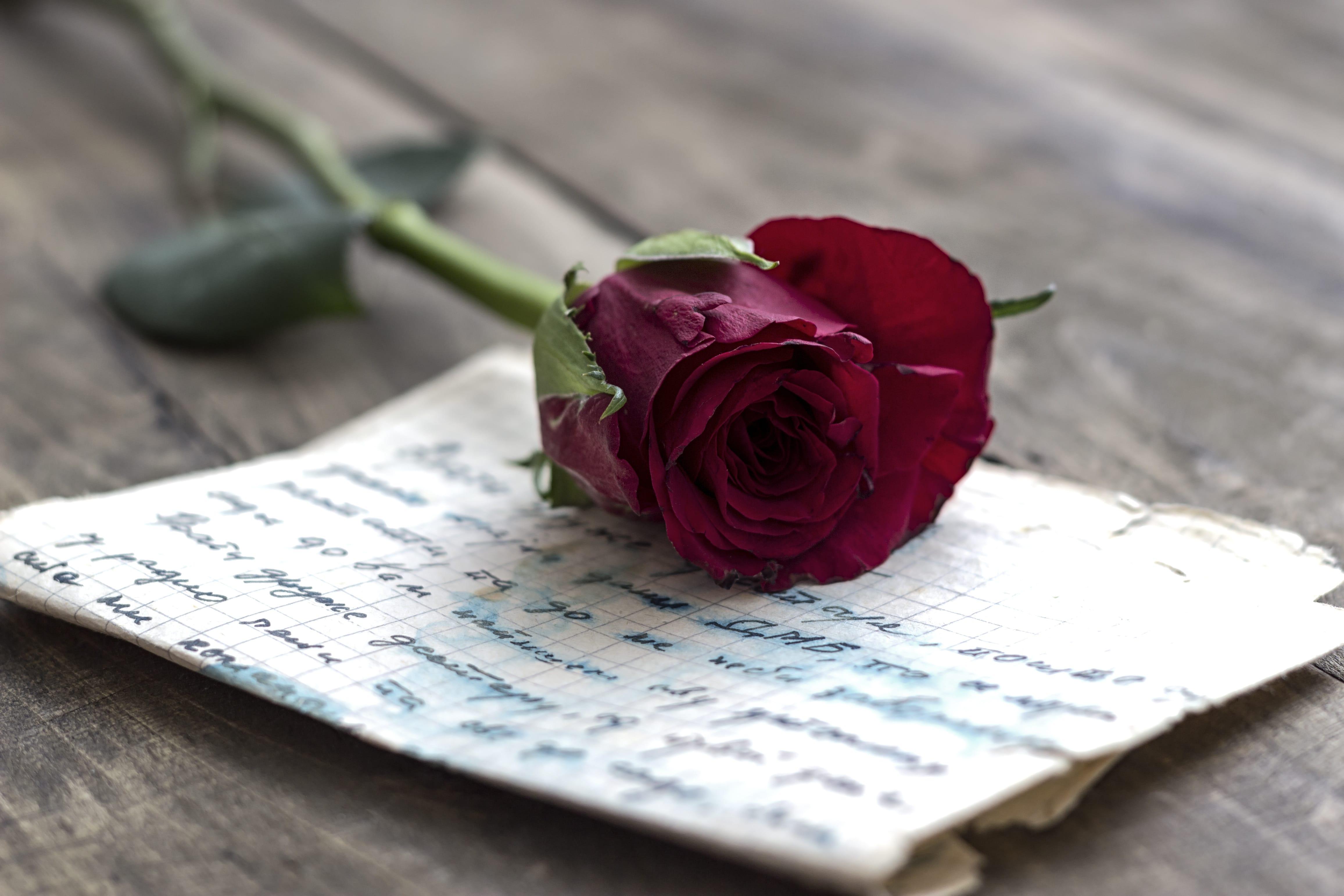 Photo of La Librairie Mollat recueille vos plus beaux mots d'amour