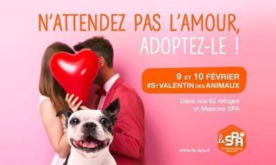 adoption chats