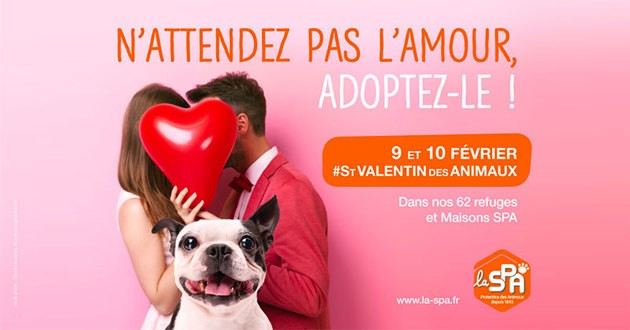 Photo of Ce week-end, adoptez un chat !