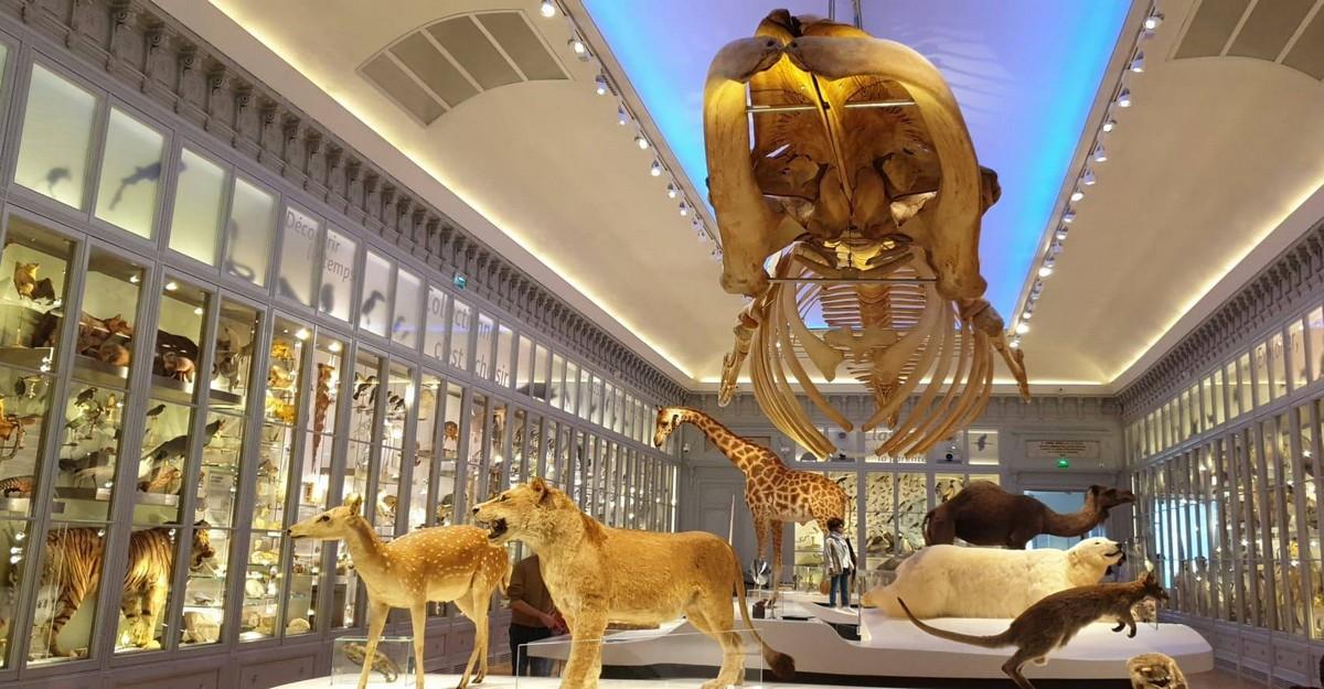 Photo of Muséum de Bordeaux : ouverture imminente