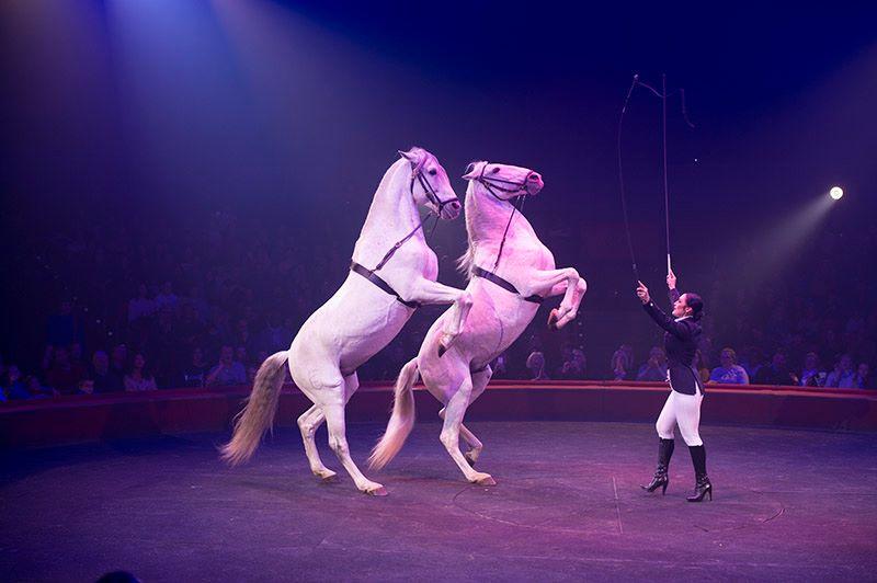 Photo of L'emblématique cirque équestre d'Alexis Gruss débarque à Bordeaux
