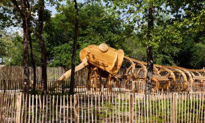 printemps de la forêt du Bourgailh à Pessac