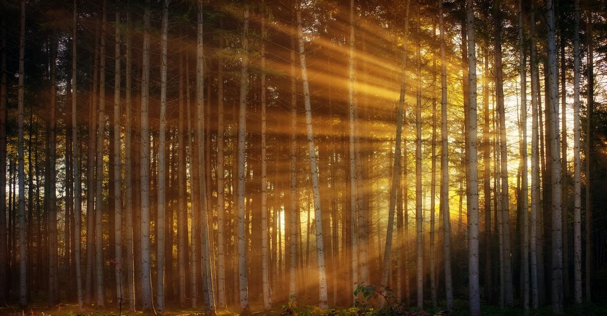 Photo of Un escape Game dans les bois
