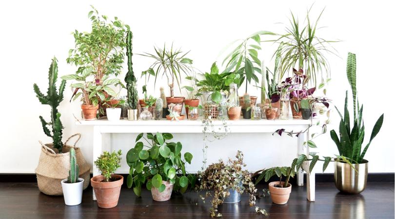 Photo of Maison Bouture est de retour sur Bordeaux pour une nouvelle vente de plantes à petit prix