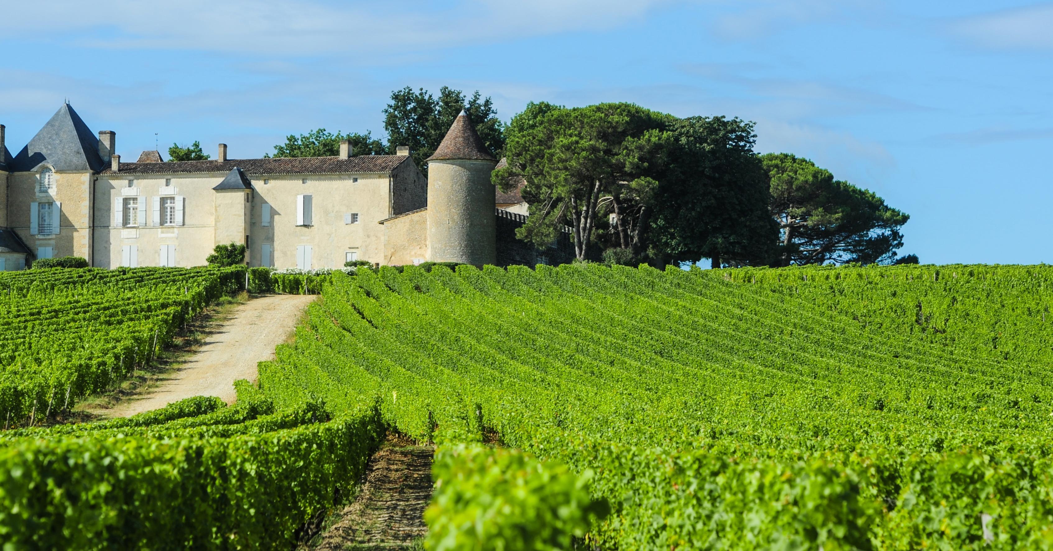 Photo of Sauternes fête le vin, redécouvrez les vins liquoreux, et cassez les codes.