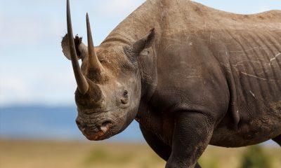rhinoceros museum de Bordeaux