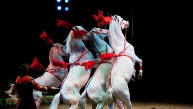 Photo of Deux spectacles équestres GRATUITS en plein cœur de Bordeaux