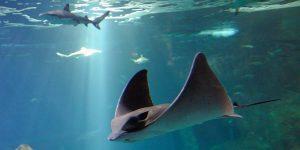 aquarium biarritz