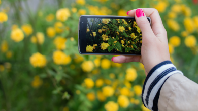 Photo of Seek, le « Shazam » de la nature pour identifier plantes et animaux