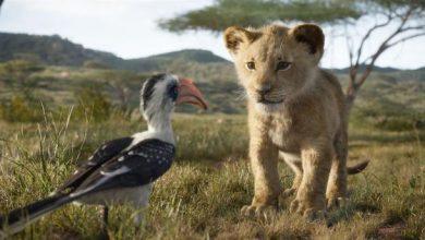 Photo of Ciné plein air – Le nouveau film «Le Roi Lion» diffusé ce soir à Saint-Médard-En-Jalles