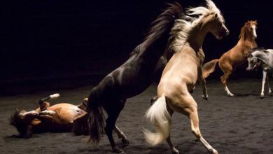 Photo of Théâtre Équestre : Zingaro fait son grand retour à Bordeaux pour une représentation époustouflante