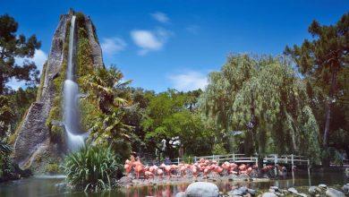 Photo of Découvrez le Zoo de La Palmyre, pour une sortie familiale réussie.