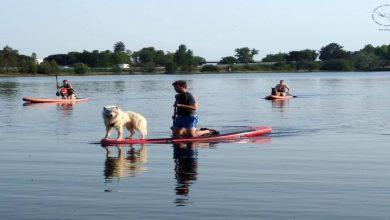 Photo of cani-paddle à Bordeaux ! Faites du paddle avec votre chien.