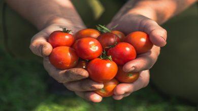 Photo of Eurotour : les producteurs de tomates et concombres dans votre ville