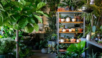Photo of BON PLAN : Grande vente de plantes d'intérieur à Bordeaux