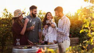 dégustation vin vignes