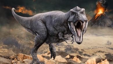 Photo of Le Monde des dinosaures débarque au Parc des expositions