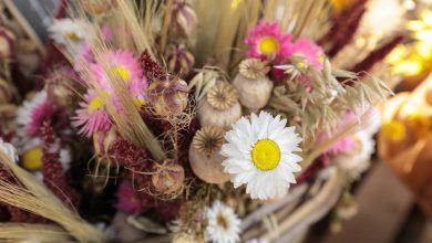 Photo of Une grande vente de fleurs séchées organisée à Bordeaux