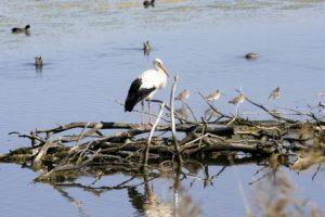 Oiseaux-Reserve-ornithologique-le-teich