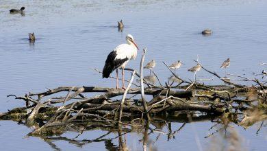 Photo of Ré-ouverture de la réserve ornithologique du Teich jeudi 21 mai