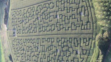 Photo of Un nouveau labyrinthe géant dans un champs de maïs à Cestas