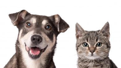 Photo of Cap Sciences consacre une exposition aux chats et aux chiens