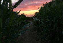 Photo of Vivez une nuit d'horreur au coeur d'un labyrinthe de maïs