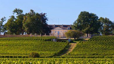 Photo of Visitez le magnifique Château Soutard tout le mois d'Octobre à Saint Emilion