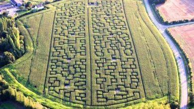 Photo of Paintball et chasse aux zombies au coeur d'un labyrinthe de maïs à deux pas de Bordeaux