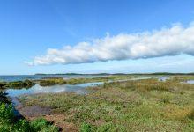 Photo of Une chasse aux trésors naturelle dans la réserve des prés salés du Cap Ferret