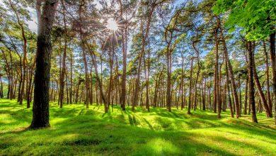 Photo of Bordeaux : opération «un million d'arbres sur la métropole»
