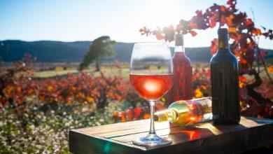 Photo of EthicDrinks, le premier négoce de vin vert est bordelais
