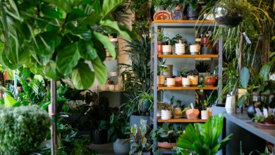Photo of Bordeaux : Grande vente de plantes du 15 au 17 janvier